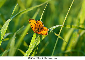 orange butterfly sits on a green grass on spring meadow -...
