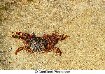 Beautiful orange colored crab resting on sand