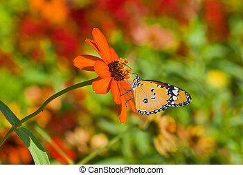 Beautiful orange flower in pair with Monarch butterfly