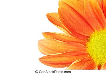 Beautiful orange flower isolated on white background