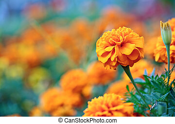 Beautiful orange flower on blurred plants background