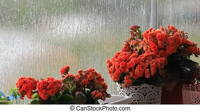 Beautiful orange flowers in front of the wet window with raindrops.
