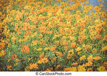 Beautiful orange flowers in green field garden