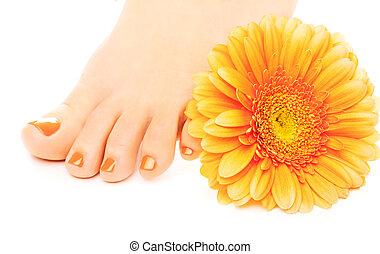 beautiful orange manicured nails with gerbera - Woman feet...