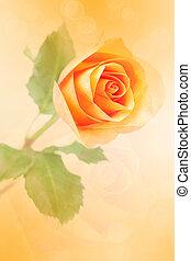 beautiful orange rose with bokeh