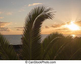 Beautiful orange sunrise over calm ocean with silhouette of palm tree leaves at La Palma, Canary Island.