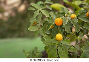 Beautiful orange tangerine on the green tree background