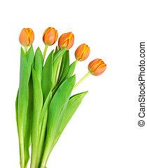 l orange tulips