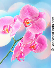 Beautiful Orchid and blur bokeh