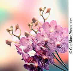 Beautiful Orchid border