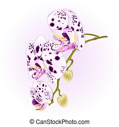 Beautiful  Orchid dots white and purple stem with flowers vector.eps