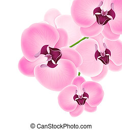 Beautiful orchid - Vector illustration beautiful orchids on...