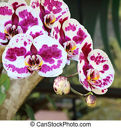 Beautiful orchid flower in the park public