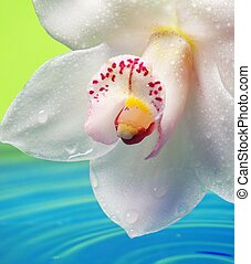 Beautiful orchid flower reflected in rendered water