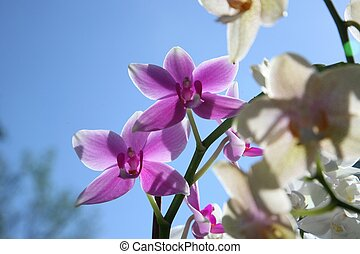 Beautiful orchid flowers cluster