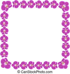 Beautiful orchid flowers frame