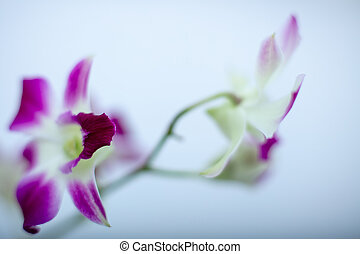 Beautiful Orchid isolated on a color background