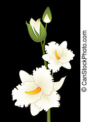 Beautiful orchid on the background