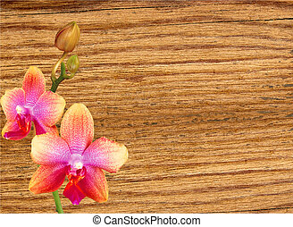 beautiful orchid over wooden table background