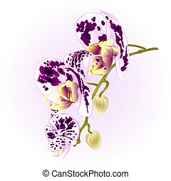 Beautiful  Orchid spotted white and purple stem with flowers vector.eps