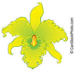 Beautiful orchid. Vector