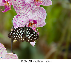 Beautiful Orchid with butterfly