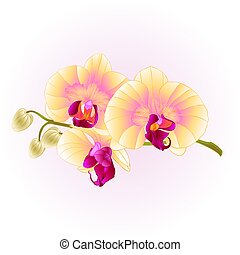 Beautiful Orchid yellow stem with flowers and  buds    vintage  vector.eps