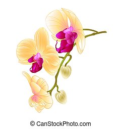 Beautiful  Orchid Yellow stem with flowers and  buds closeup isolated vintage  vector.eps
