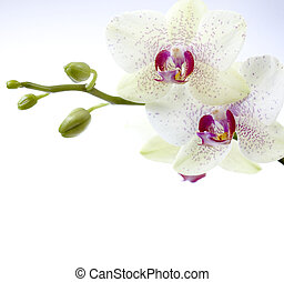 Beautiful Orchids Border
