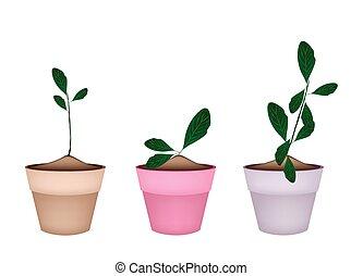 Beautiful Ornamental Plants in Ceramic Flower Pots