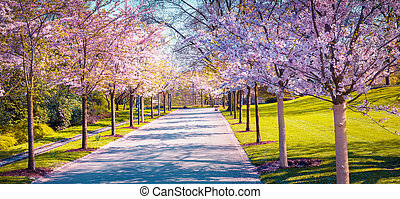 Beautiful outdoor scenery in Germany. Alley of blossoming...