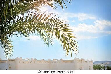 Beautiful palm branch on blue sky background