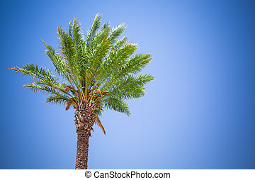 beautiful palm tree against blue sky background