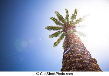 beautiful palm tree against sunny blue sky