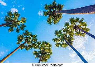 Beautiful palm tree on blue sky