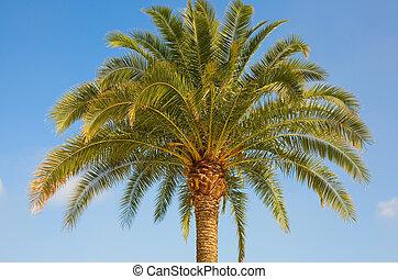 Beautiful palm tree over the blue sky