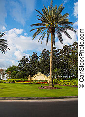 Beautiful palm tree with an entrance gate behind it in Florida, Orlando