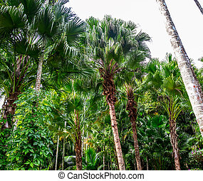 Beautiful palm trees in the park.