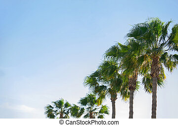 Beautiful Palm Trees in the Summer