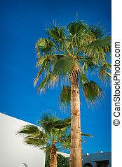 Beautiful palm trees on blue sky background