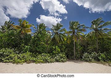 Beautiful palmtrees at a tropical beach