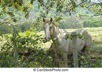 Beautiful Palomino stallion horse by a barbwire fence in a farm