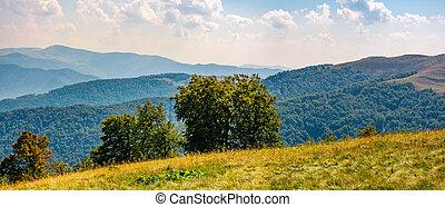 beautiful panorama of Carpathian mountains in early autumn...