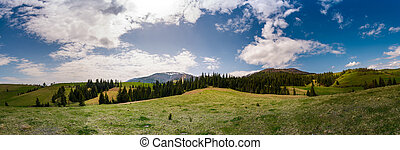 beautiful panorama of mountainous area in spring. spruce...