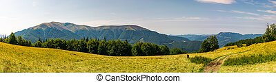 beautiful panorama of summer landscape in mountain. beech...