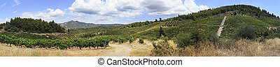 Beautiful panorama of vineyards in the mountains.