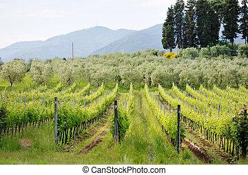 beautiful panoramic view of Tuscan. Italy