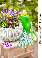 beautiful pansy summer flowers in garden, fertilizer, gloves, tools