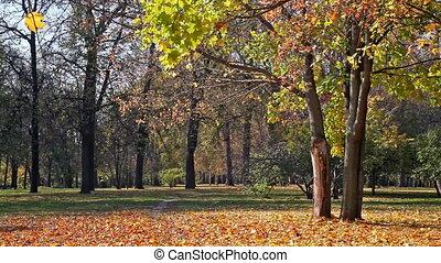Beautiful park in sunny autumn day