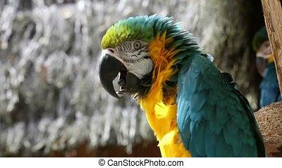 Beautiful parrot 01